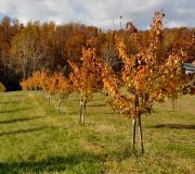 Autumn at Rural Ridge Orchard
