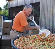 Culling the apples