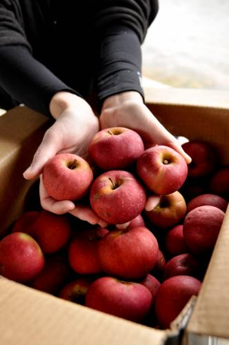 Winesap apples are wonderful for so many applications.