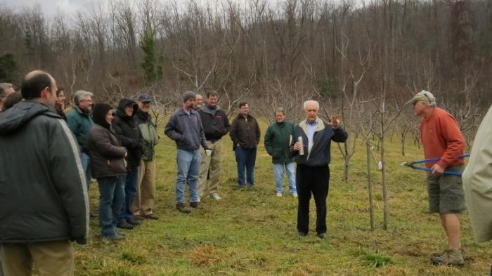 pruning apple trees