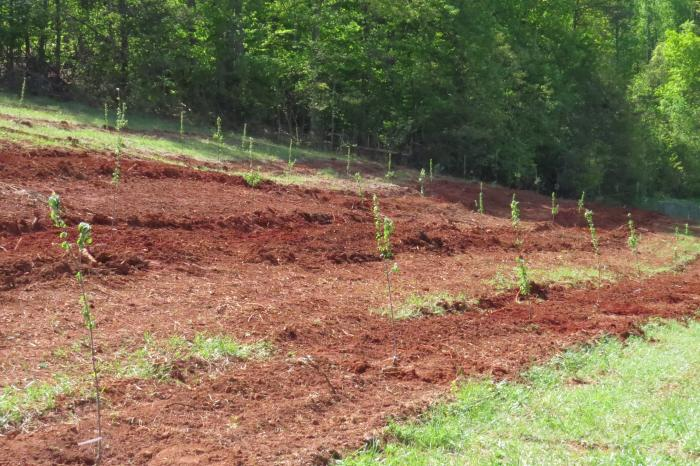 The new cider orchard